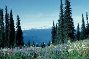 Mt Revelstoke National Park