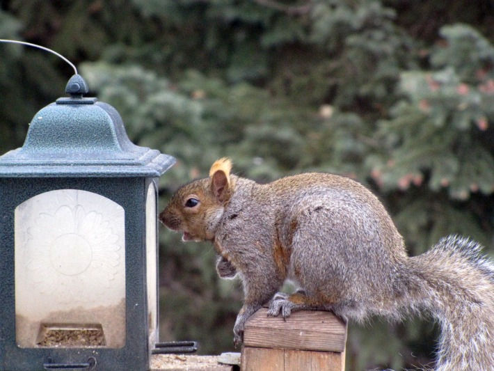 Squirrel Saturday #5