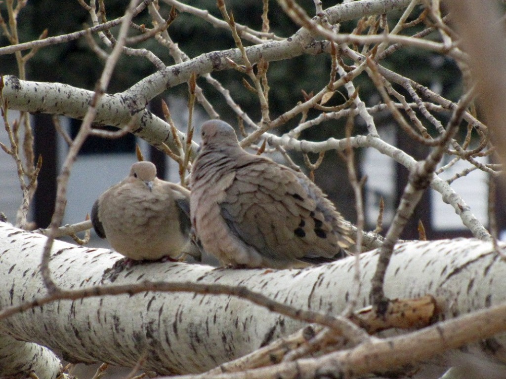 Wednesday Wings: Dove Love