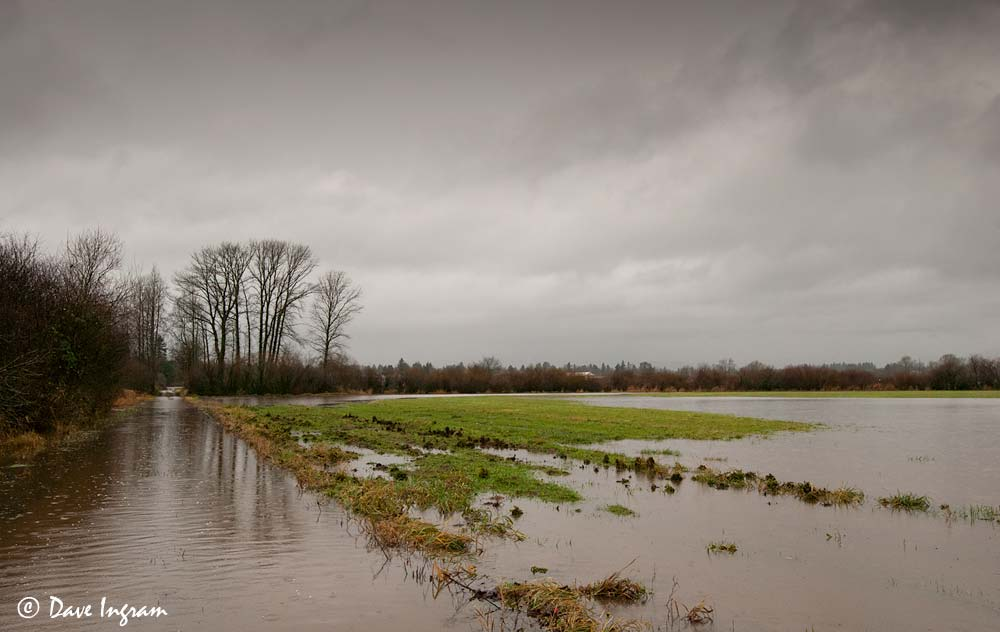 Flooded Farm Field - December 2012