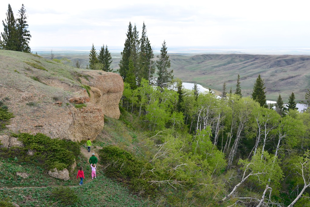 Conglomerate Cliffs in Saskatchewan West Block of Cypress Hills, looking north.