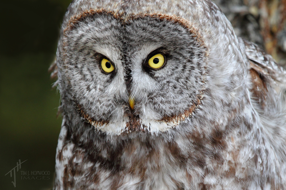 types of essays owl Do i know enough about my topic to write an effective compare/contrast essay unless you're being asked to do some research as part of your compare/contrast project, make sure that you choose 2 things that you feel comfortable discussing,.