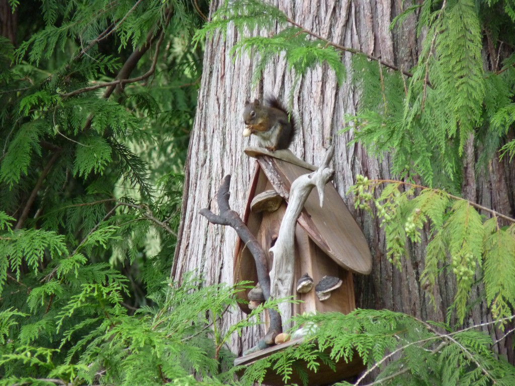 Q, our resident Red Squirrel, on top of the lovely birdhouse we received as a housewarming gift years ago.