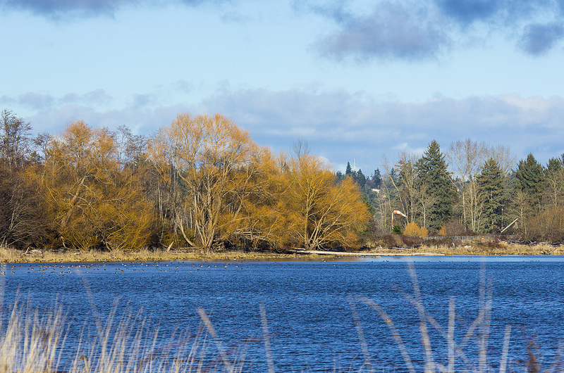 Courtenay River Estuary December 2013
