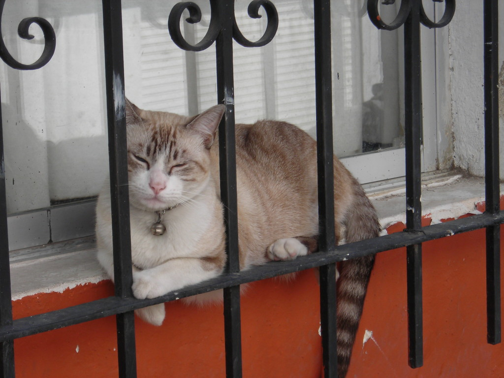 Cat behind bars.