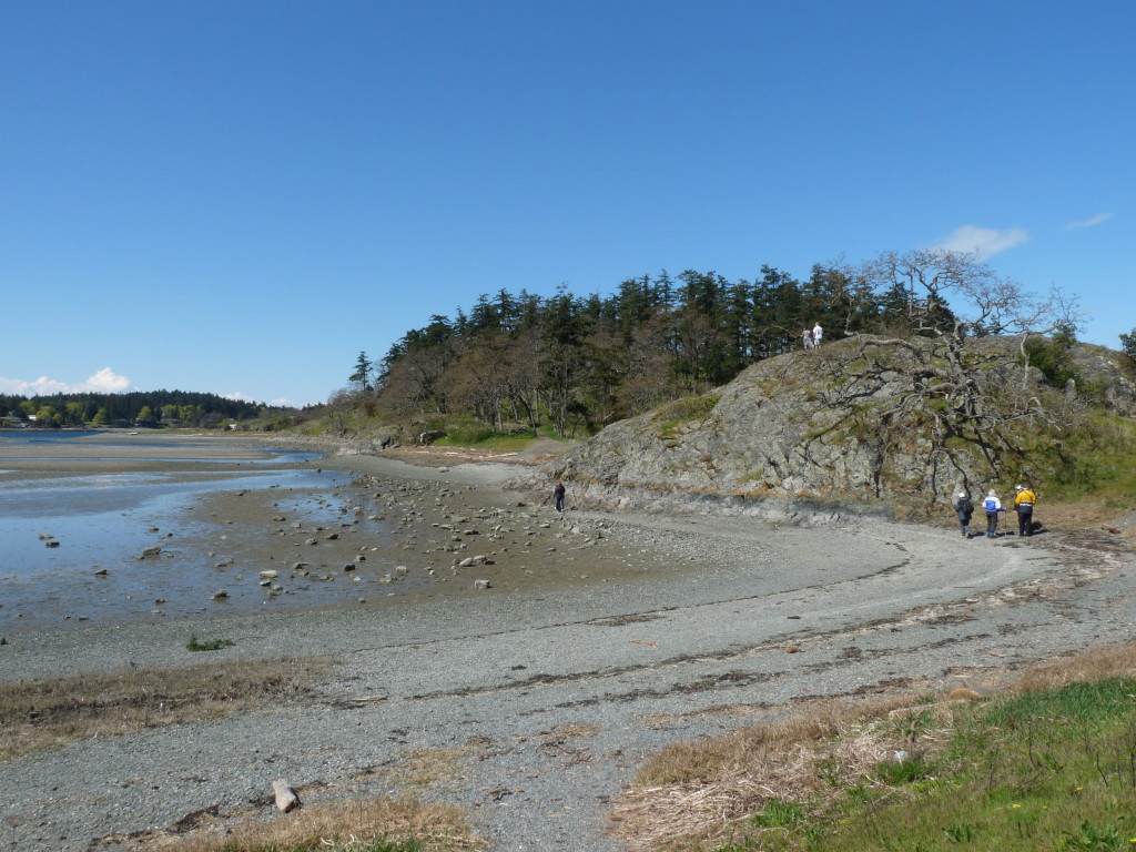 Brickyard Beach on Gabriola, part of the Bird Studies Canada Beached Bird Survey program