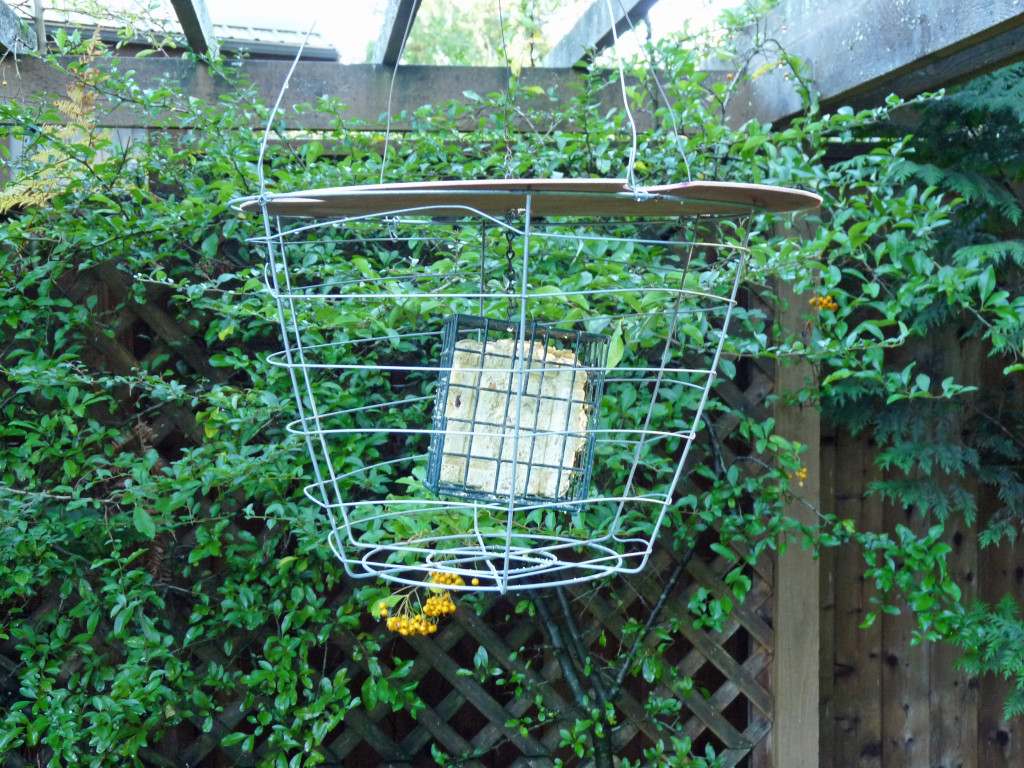 Contraption number ? Suet in a wire cage.