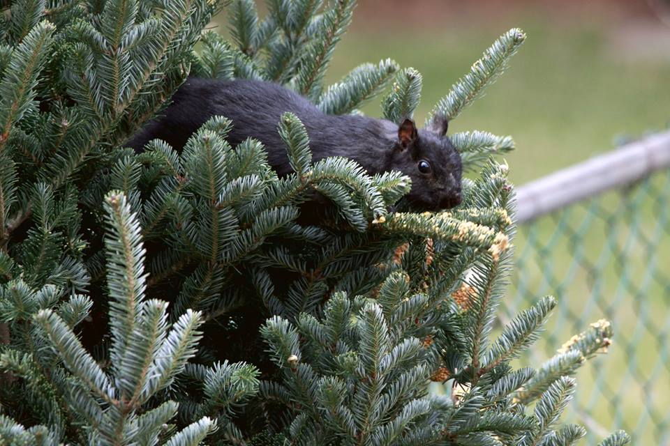 Enjoying the tree.