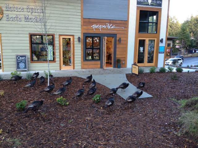 """Gabriola turkeys check out the new """"mall""""."""