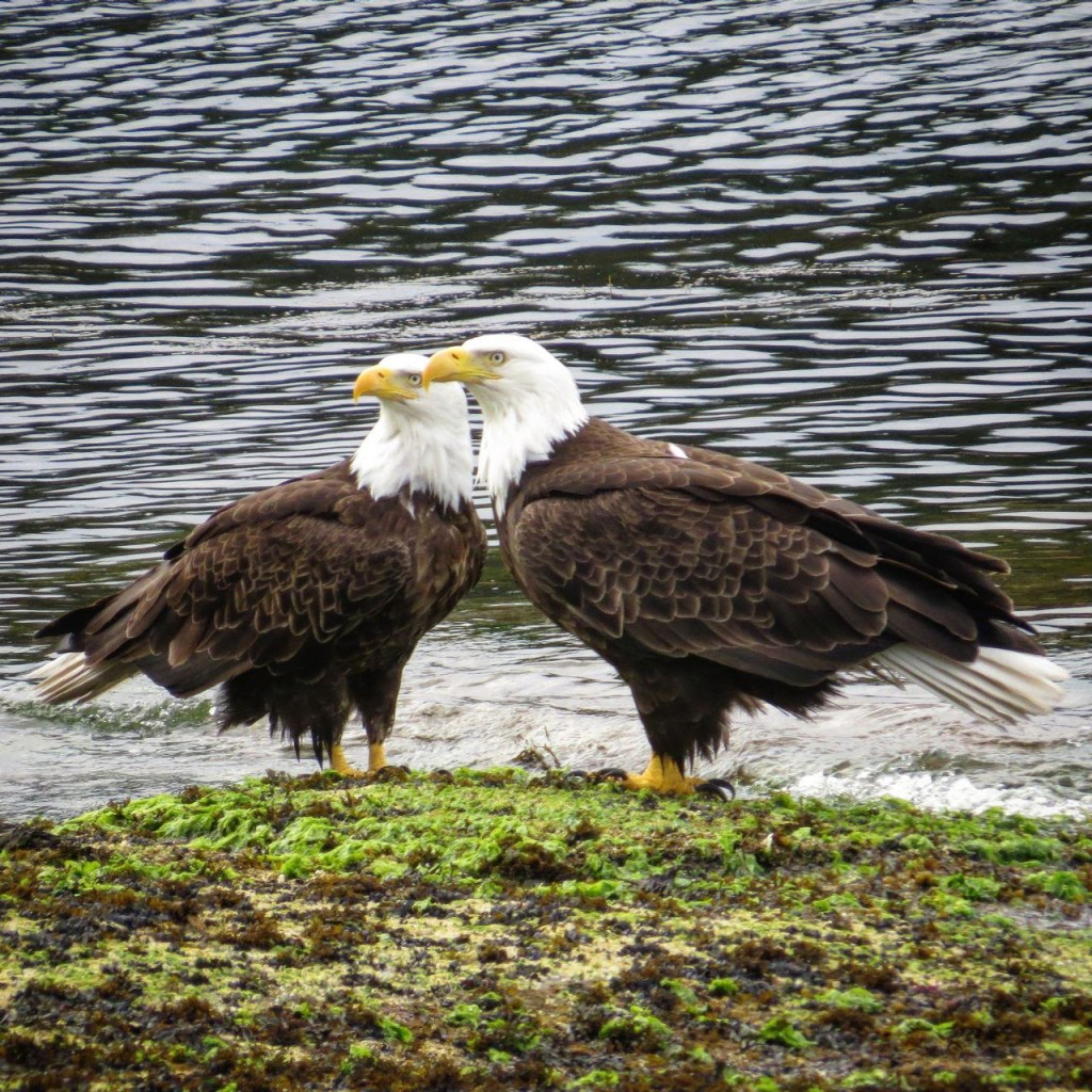 Bonded pair at Orlebar Point in front of the Surf Lodge. Photo by Tina Kirschner.