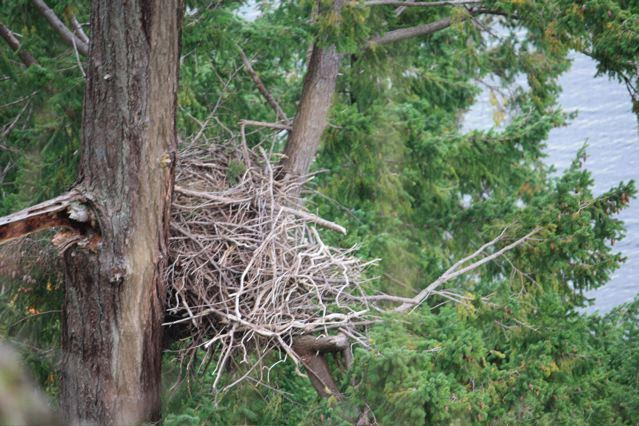 Nest. Photo by Tawny Capon.