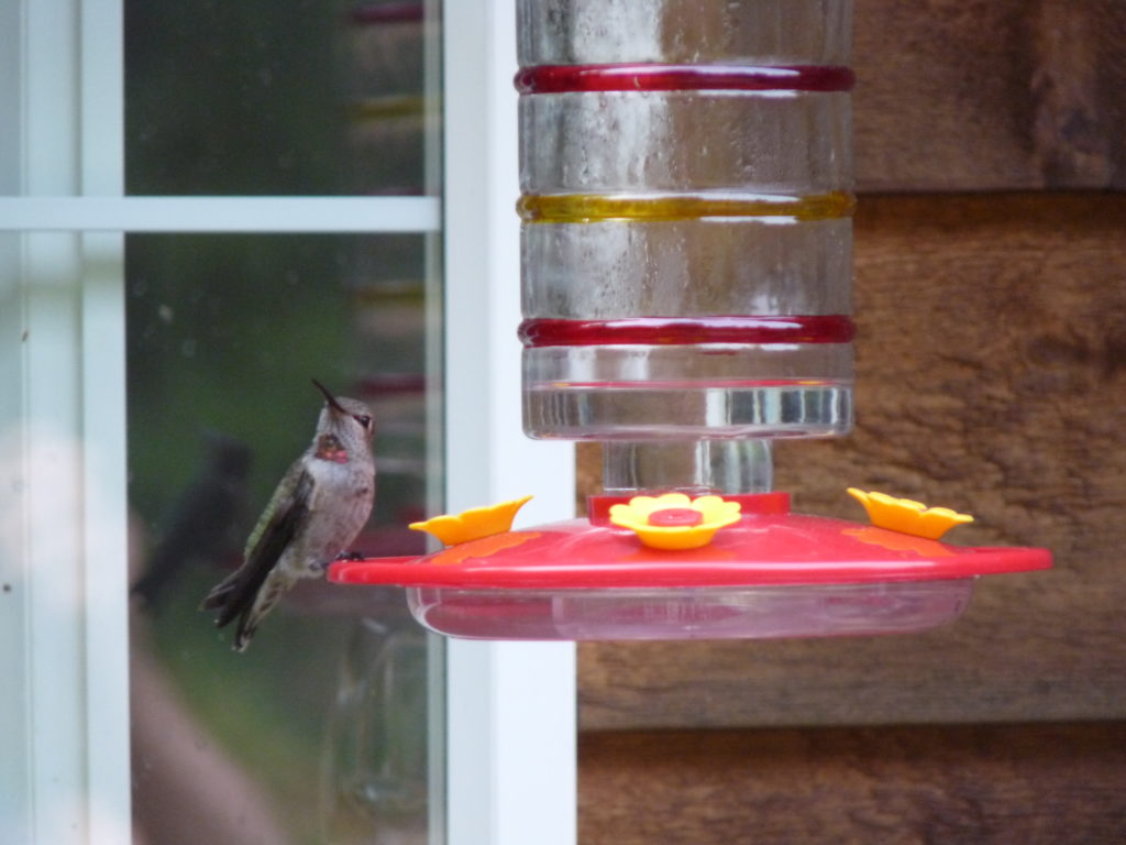 Glass hummer feeder that comes apart for easy cleaning