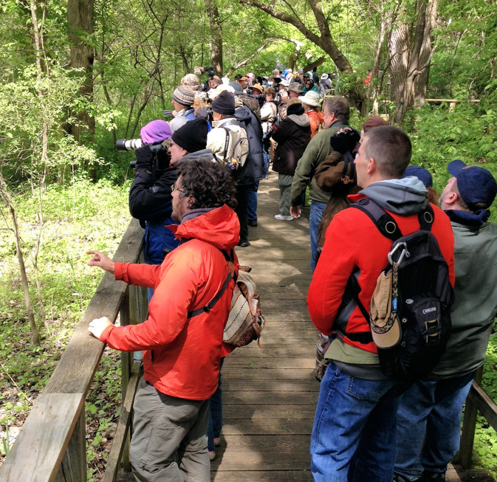 On 'the boardwalk' at Magee Marsh - this was a typical scene.