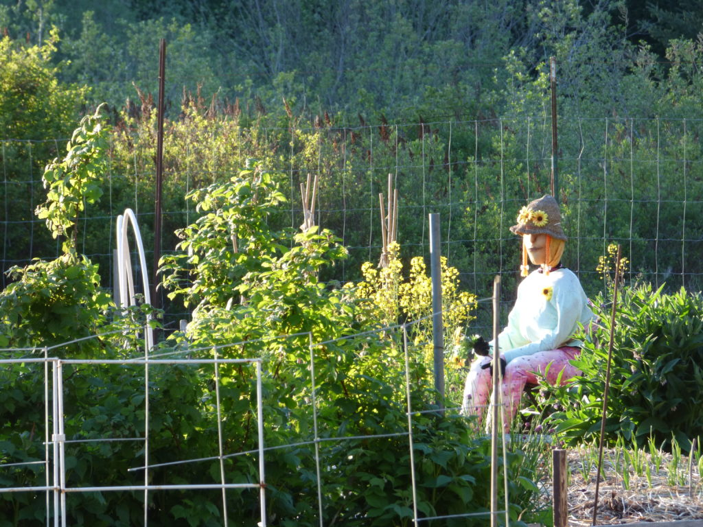 One of the many allotment gardens with a not-very-scary scarecrow lady.
